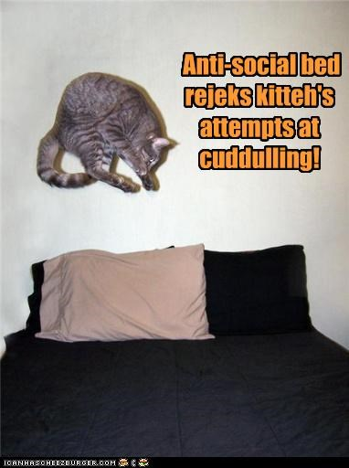 anti social attempts bed caption captioned cat cuddling denial FAIL refusal rejected rejection rejects - 4336488448