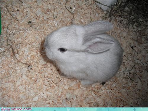 baby bunny happy bunday pet reader squee - 4336942080