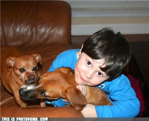 animals,biting,cute kid,dogs,kids,myths,photobomb
