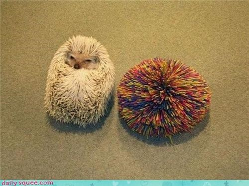 categoryimage,Compare And Contrast,hedgehog,kooshball,rolly polly,spines,toy
