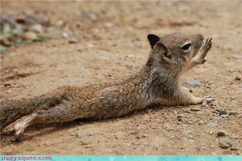 chipmunk squirrel - 4338407424