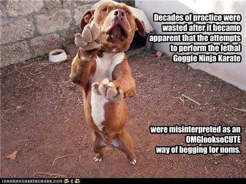 begging,cute,decades,karate,misinterpretation,misinterpreted,noms,pit bull,pitbull,practice,upset,wasted