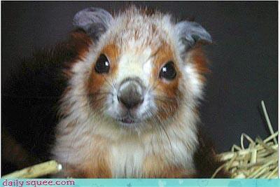 cute flying squirrel woodland - 4339046656