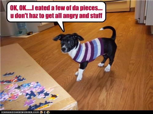 admitting angry border collie eated few i did it noms Okay pieces please puppy puzzle sorry stay calm stuff sweater - 4339373312