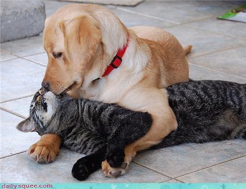 cat cute dogs kitten puppy - 4339573760
