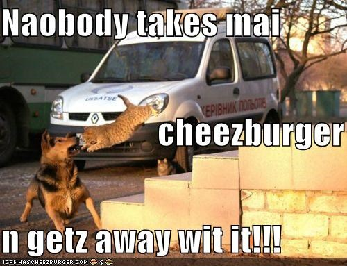 Cheezburger Image 4340107520