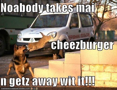 Cheezburger Image 4340122880