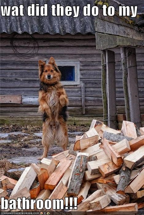 bathroom,confused,cut,german shepherd,logs,lumber,mixed breed,pieces,question,ruined,Sad,surprised,timber,tree,upset