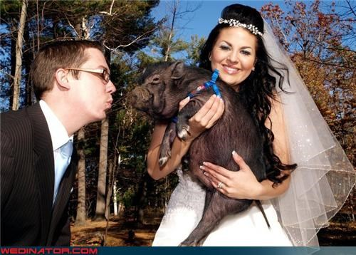 bride,brides-weird-hair,eww,fashion is my passion,funny bride picture,funny groom picture,funny wedding photos,groom,pet at a wedding,pig wedding,surprise,were-in-love