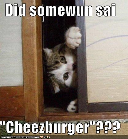 Cheezburger Image 4340549888