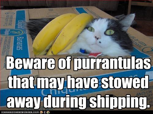 bananas beware box caption captioned cat hiding neologism purr shipping stowed away warning - 4340801792