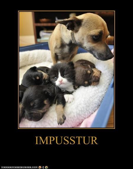 bed,chihuahua,cuddling,impostor,kitten,pun,puppies,puppy,sleeping,whatbreed
