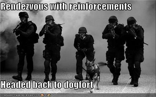 black and white dogfort dogs guns rendezvous swat - 4341673984