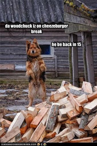 Cheezburger Image 4341679360