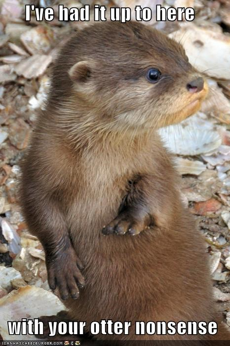 caption,captioned,demonstrating,demonstration,enough,fed up,had it,I Can Has Cheezburger,nonsense,otter,pun,up to here