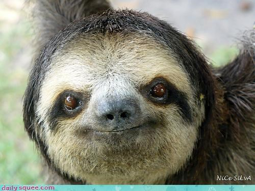 cute,sloth,smile