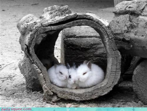 Babies bunny cute squee spree - 4342072064