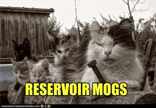 angry art caption captioned cat Cats cover dogs mogs Movie posing pun Reservoir Dogs rhyme rhyming Staring title