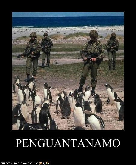 animals,Guantanamo Bay,penguins,soldiers,wordplay