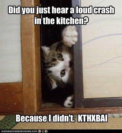 accident alibi asking caption captioned cat crash denial did not door hypothetical kitchen kthxbai loud noise peeking question - 4342264576