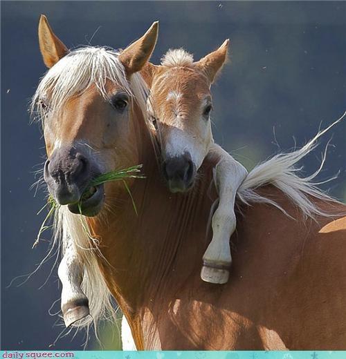 baby cute foal horse mama mare pony - 4342447360