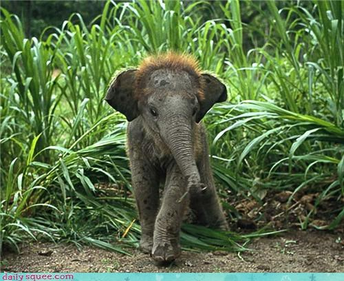 elephant,baby,bad hair,puberty,squee