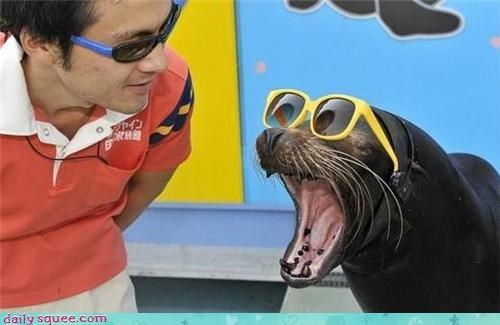 cool,fashion,sunglasses,seal,squee