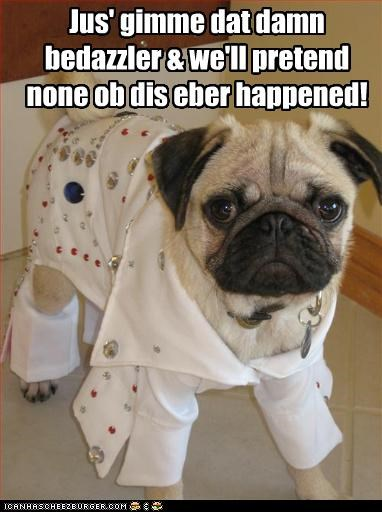 costume deal disco dressed up embarrassed Hall of Fame outfit pretending pug upset - 4342531328