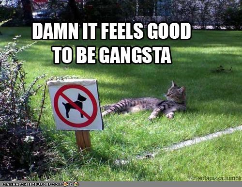 caption chillin confident dogs gangsta no dogs relaxed sign - 4342700800