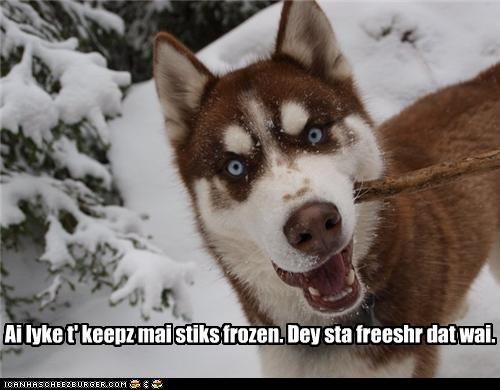 explanation,fetch,fetching,fresh,fresher,freshness,frozen,husky,preference,snow,sticks