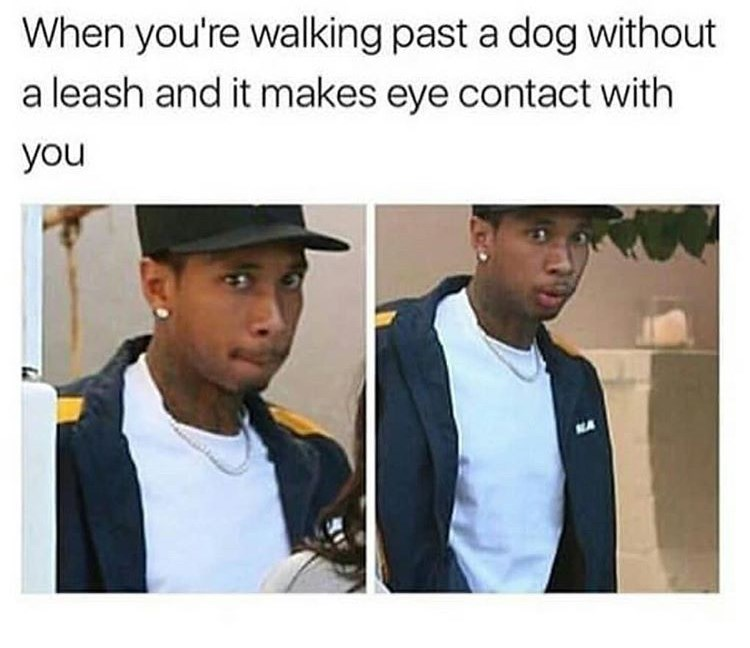 dank dog meme and dank memes to make you laugh
