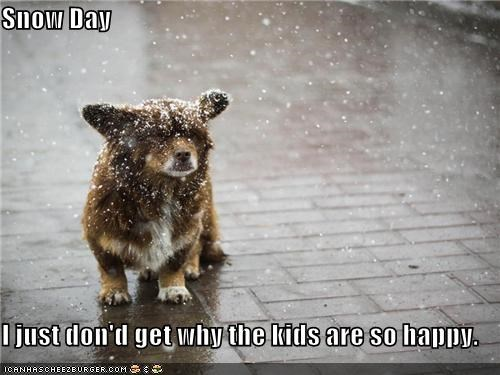 confused corgi covered do not understand Hall of Fame happy kids mixed breed snow snow day snowing