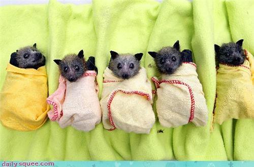 Bundles of bats