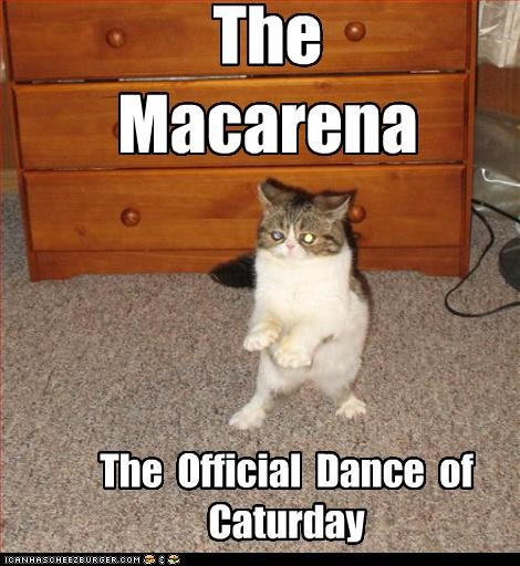 caption,captioned,cat,Caturday,dance,dancing,Macarena,official