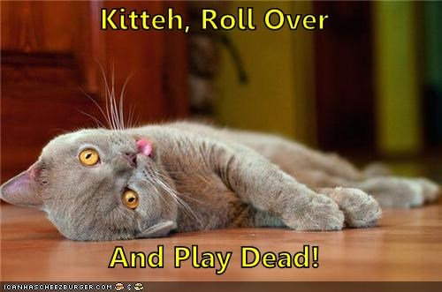 animals critters dead kitten roll over tricks - 4344525312