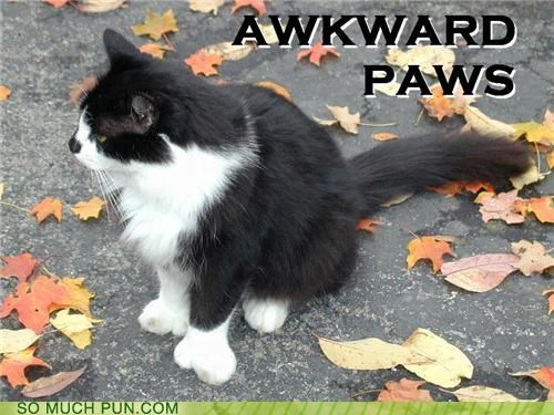 Awkward cat conversation homophones literalism lolwut pause paws silence - 4344813056
