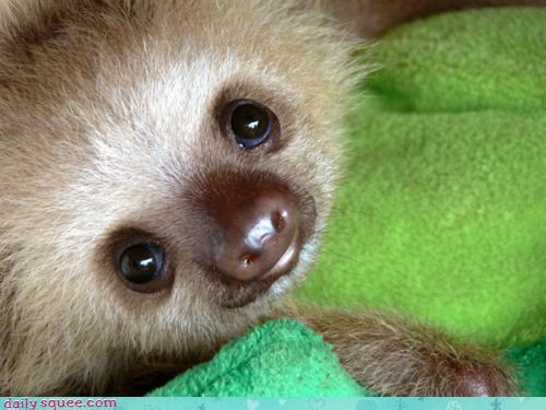 boop cute derp face sloth - 4345044992