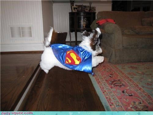 costume dogs pet reader squee superman - 4345469184