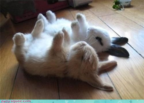 bunnies,friends,Hall of Fame,happy bunday,nap,upside down