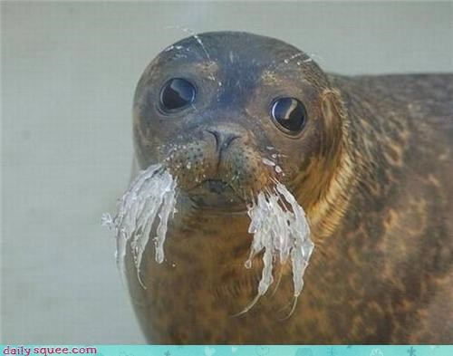 cute FAIL frozen Sad seal whiskers - 4345603584