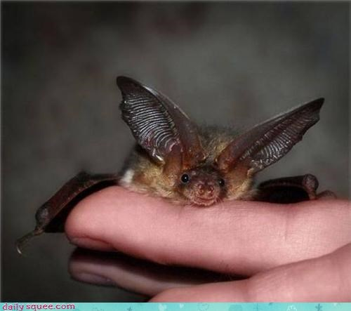 Bats are cute too