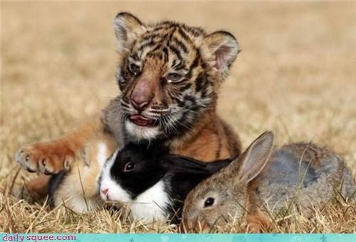 baby bunny cute squee spree tiger - 4345623808