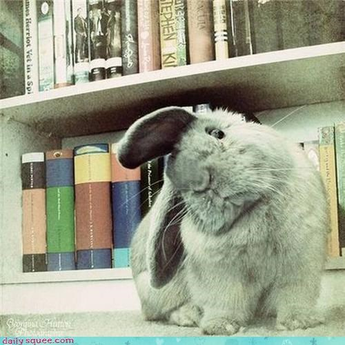 books Hall of Fame happy bunday rabbit reading - 4345626624