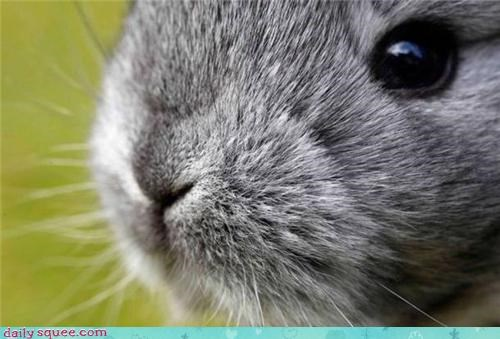 bunny cute nose rabbit squee spree weird - 4345628416