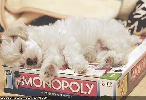 cute cyoot puppeh ob teh day monopoly puppy sleeping terrier whatbreed