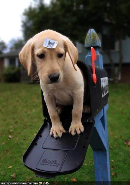 begging,cat,cyoot puppeh ob teh day,do not want,labrador,mail,mailbox,puppy,stamp