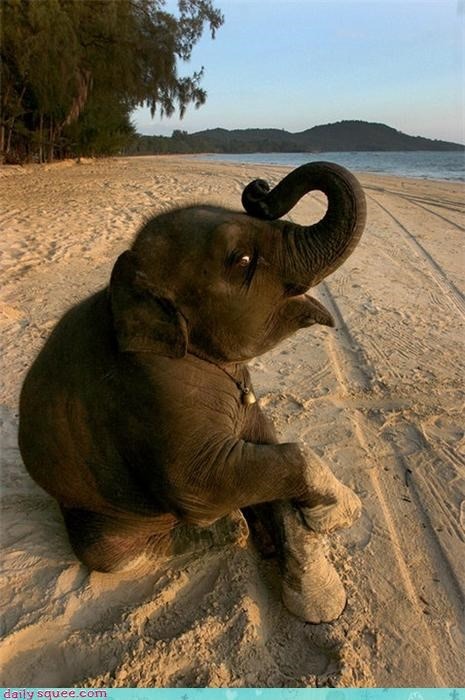 baby,beach,elephant,happy,sand,Tropical,trunk,vacation