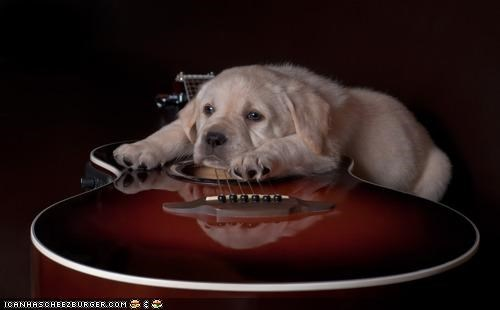 blues,cyoot puppeh ob teh day,genre,guitar,labrador,laying,moping,Music,puppy
