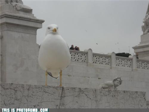 animals bird lol photobomb statue threatening - 4346674688