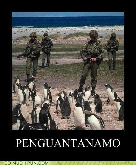 combination contraction dont worry escape flight Guantanamo Bay guards neologism penguin prison - 4346682112